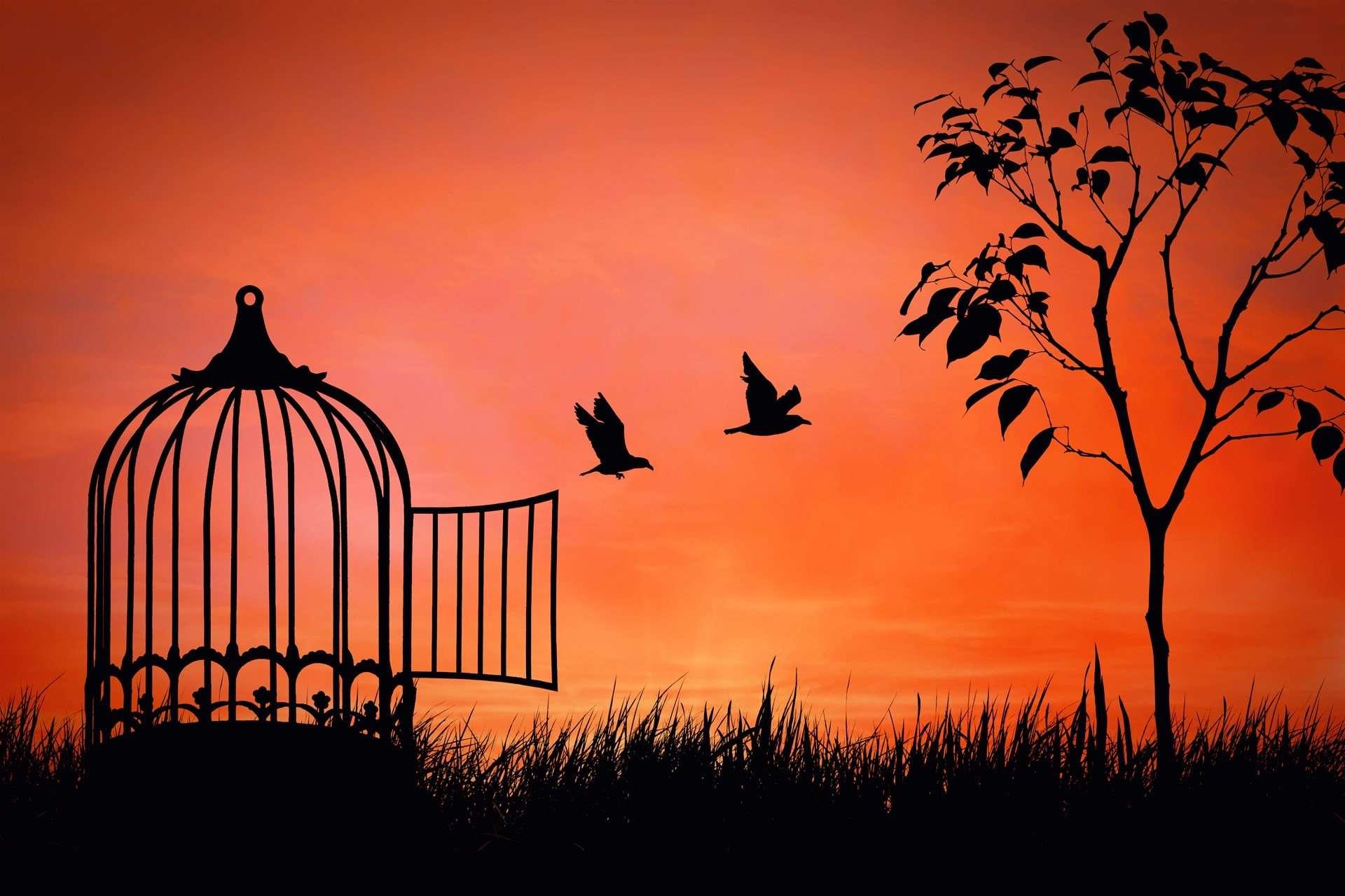 Szabadság Törvénye Omniverzum